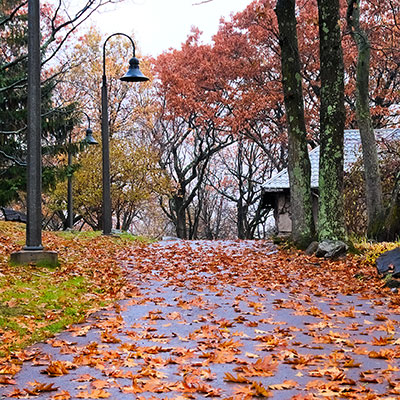 leaves on the ground in Fall